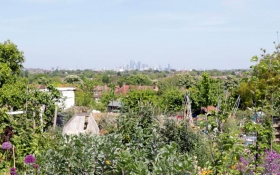 Rosendale Allotments